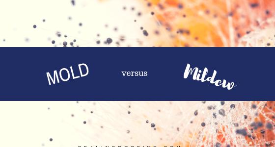 Mold versus Mildew